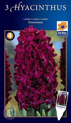 hyacint woodstock