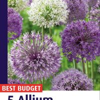 allium sensation mix