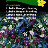 hængelobelie cascade mix