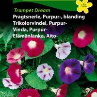 Pragtsnerleblanding Trumpet Dream