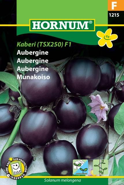 aubergine kaberi(TSX250)F1